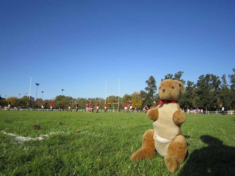 Studiare in Australia: il rugby australiano