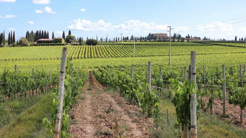 corsi viticoltura Lincoln university Nuova Zelanda