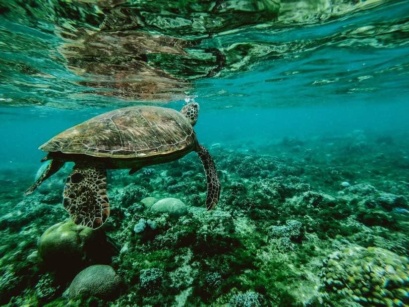 Studiare biologia marina in Australia