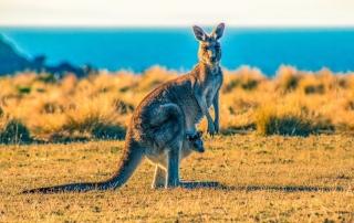 aree regionali in australia