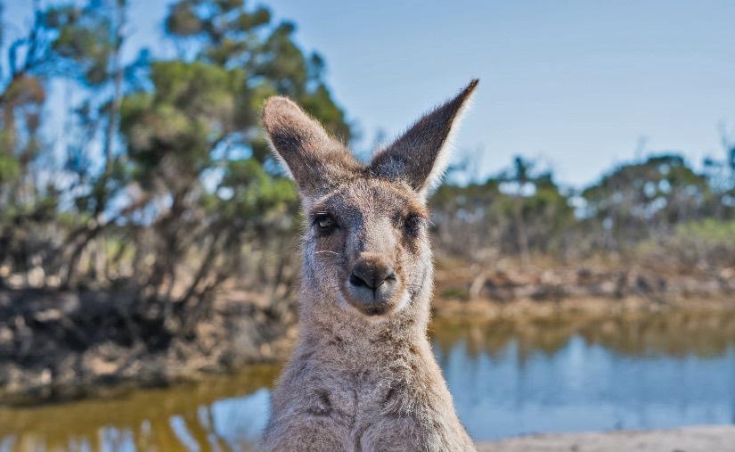 studiare e lavorare per 6 mesi in australia