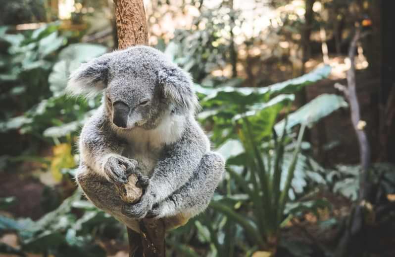 Studiare zoologia in Australia può essere molto interessante