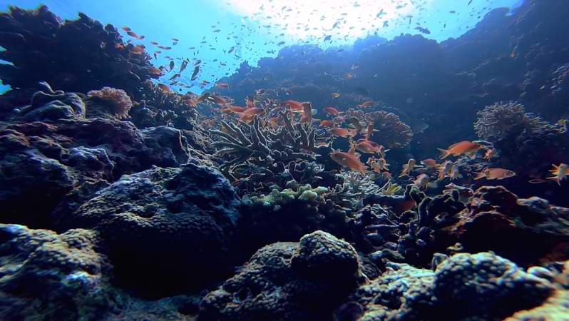 Studia biologia marina in Australia